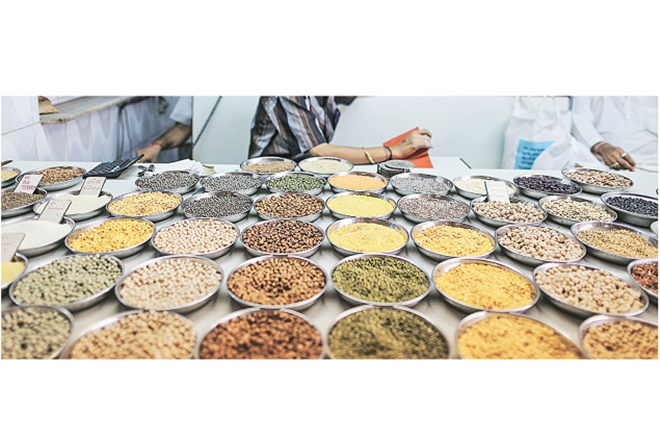 prices of pulses, pulses prices, market prices, minimum support price, MSP, arhar, import duty, kharif pulses, rabi pulses