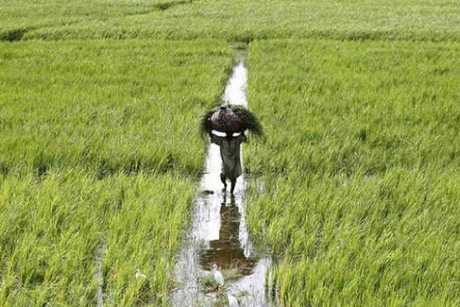 farmers income, why farmers income needed to be increase, why increase farmers income, farmers income increase