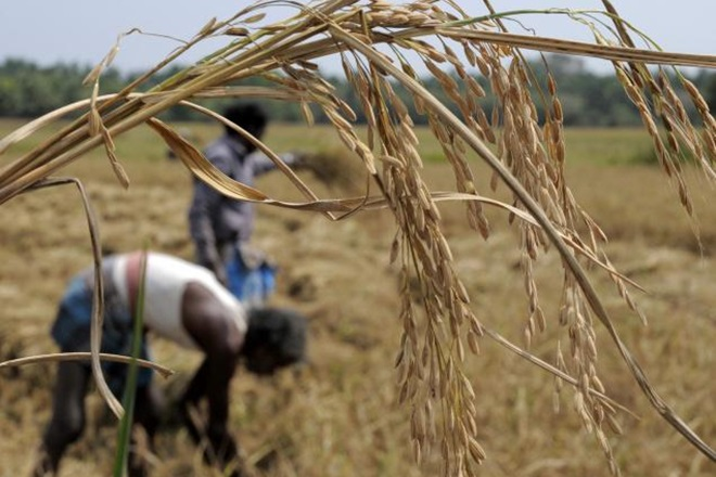 agriculture reforms, reforms needed for agriculture, what is needed for agriculture