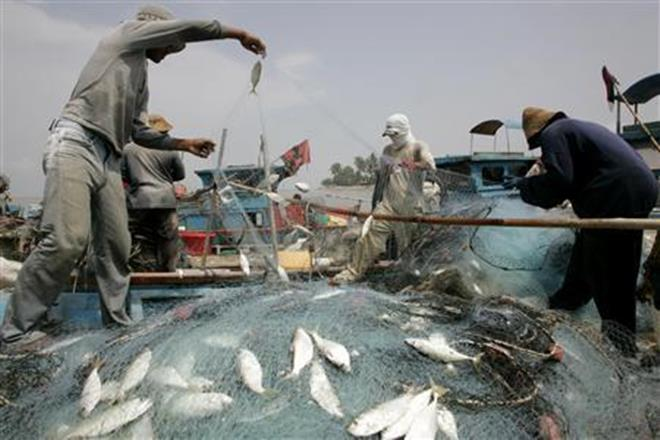 fisheries, FAO, india, aquaculture, marine waters, fisherfolk, Asia,  fishery production,  fish stocks