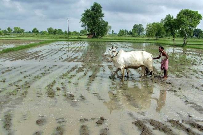 Budget 2018: Even though the excitement on the Budget eve is predominantly an urban phenomenon through which our elite think the direction of economic policy can change, the rural and agriculture sector does not pin such high hopes on it. (Reuters)