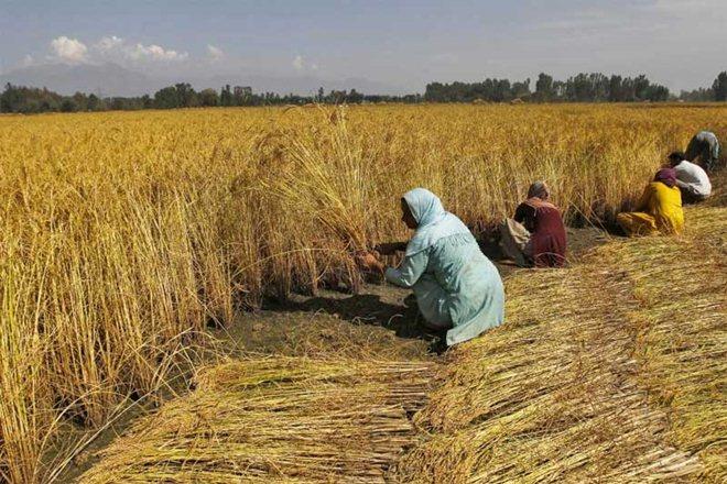 Budget 2018 Arun Jaitley political pundits agriculture