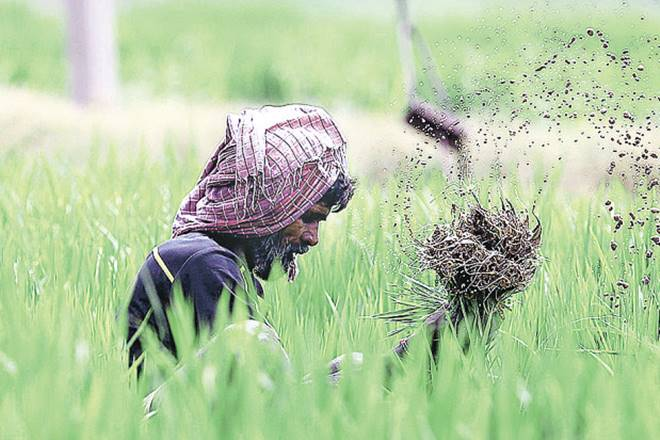 Budget 2018: Operation greens, a Rs 500-crore initiative, promises to bring farmers closer to the market place with better logistics and processing facilities.