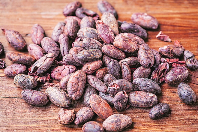 Andhra Pradesh, Kerala, Karnataka, top cocoa-producing states, cocoa, india