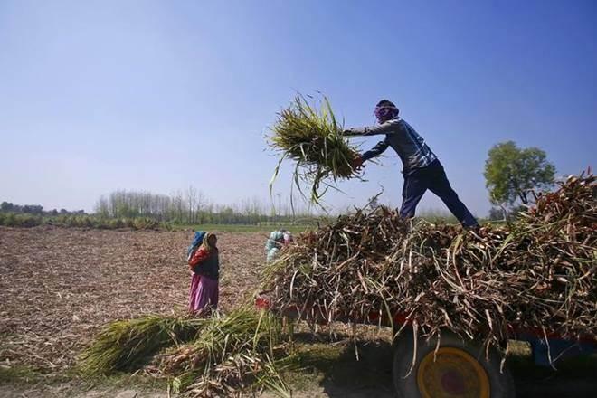 PM Narendra Modi , farm sector, farmers, economy, agriculture sector
