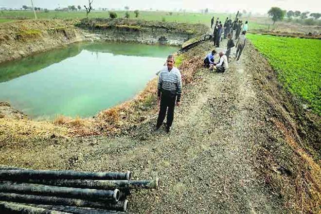 Water harvest, Punjab, DBT, farm sector, paddy, punjab farmers