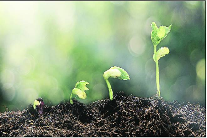 soil, improving soil, health, indian farmers