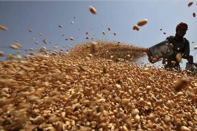 wheat prices, wheat, wheat harvest, agriculture sector, economy
