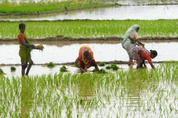 NABARD, AGRICULTURE SECTOR, AGRICULTURE INDUSTRY, ECONOMY