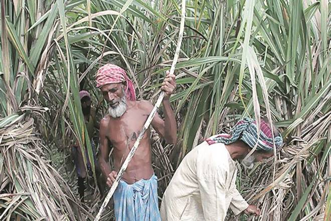 supreme court, uttar pradesh, uttarpradesh sugar mills, sugar mills, sugar sops