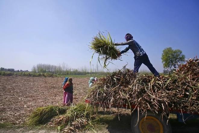 cash crunch, farm economy, gujarat