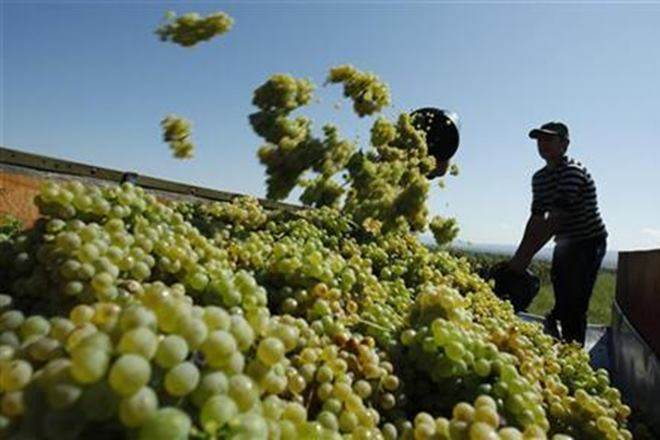 grape,Grape exports, europe,Grape Exporters, commodities, markets