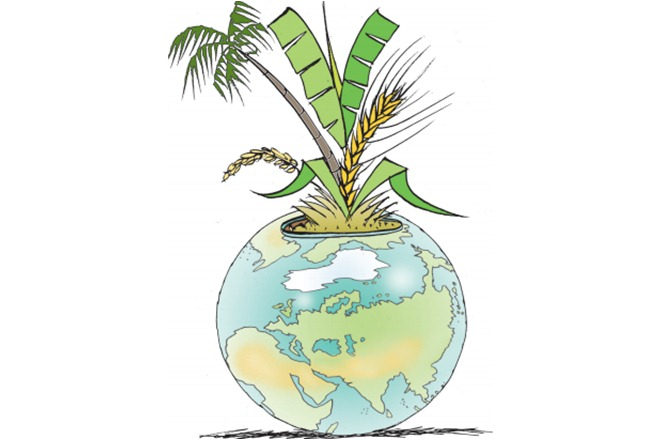 To provide for a population projected to reach 9.3 billion by 2050 and support changing dietary patterns, estimates are that food production will need to increase from the current 8.4 billion tonnes to almost 13.5 billion tonnes a year.