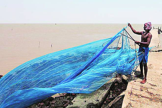 Shrimp, lower production,price decline,shrimp prices,Seafood Exporters Association of India, SEAI,Farmers