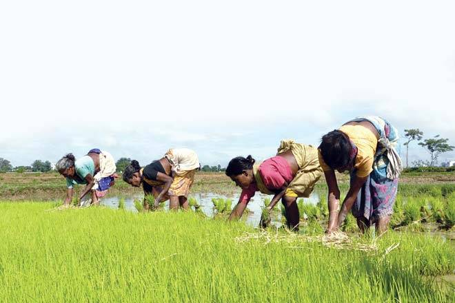 vedic farming, farming, agriculture, agriculture sector