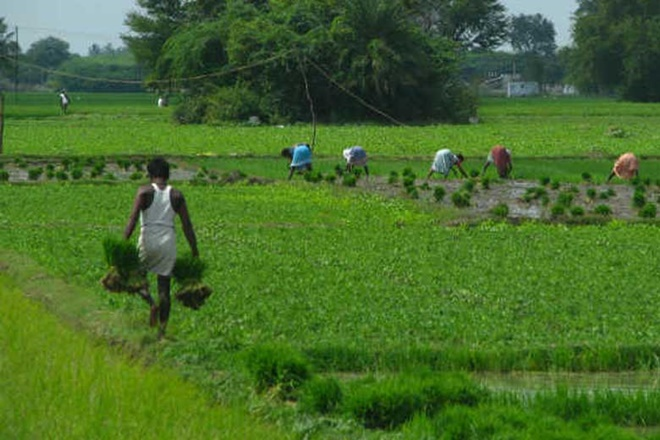 agriculture sector, market economy, india
