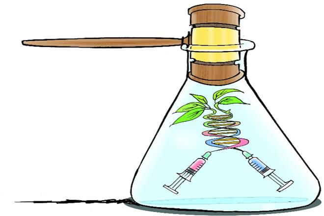 genetically-modified , high court, delhi high court