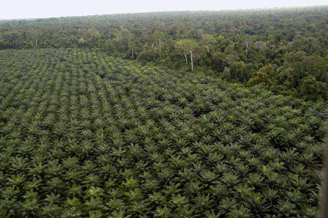 Cloud technology, Palm trees,German firm,ERP, SAP Cloud Platform,German enterprise, palm oil producer