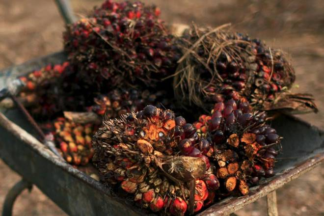 Palm oil prices,Crisil report,edible oil, duty hike palm oil