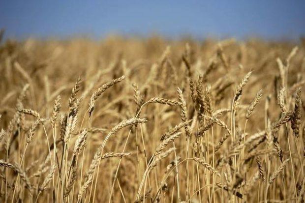 customs duty, wheat customs duty, Government,import duty,