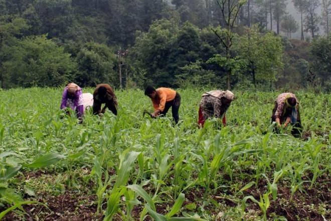 Pradhan Mantri Fasal Bima Yojana, PMFBY, BJP, NDA govt, agri food, narendra modi