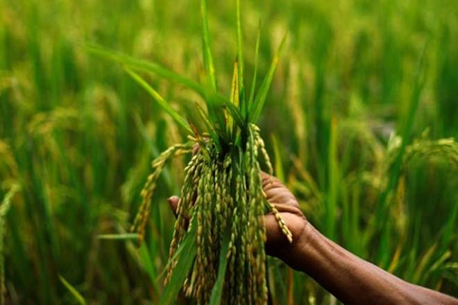 kharif, agriculture sector, pmfby