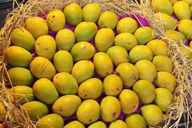 mango, maharashtra, mango season, mangoes price, mango price, nashik