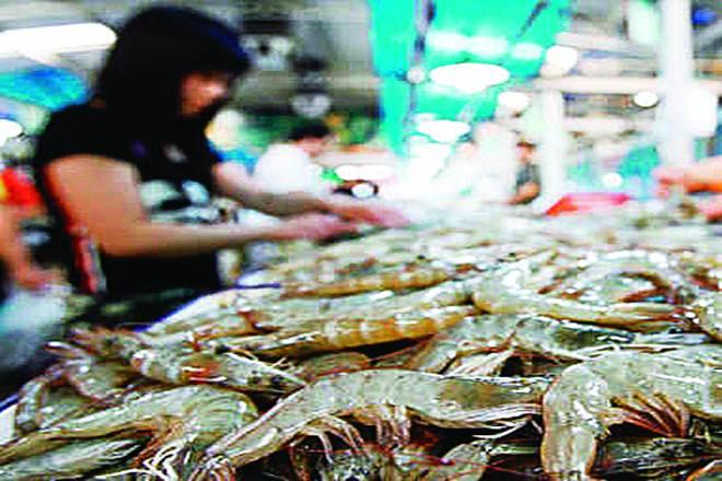 sea food, fish export
