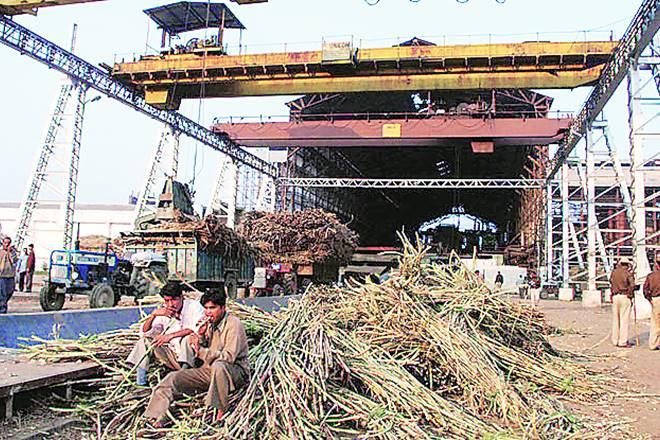 Sugar production , sugar industry, sugar