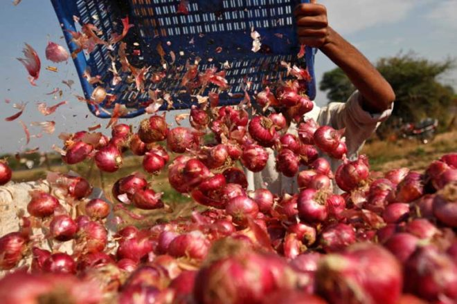 onion production, onion prices, onion price rise, onion mandis