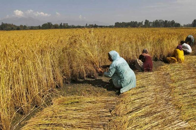 indian farming, agriculture, crop loss compensation, practising agriculture