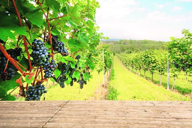 australia, wine, australian wine, wine taste