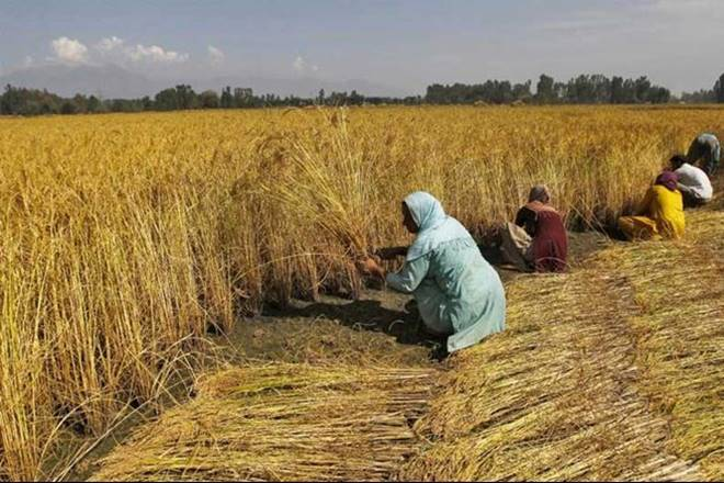 agriculture sector, crop