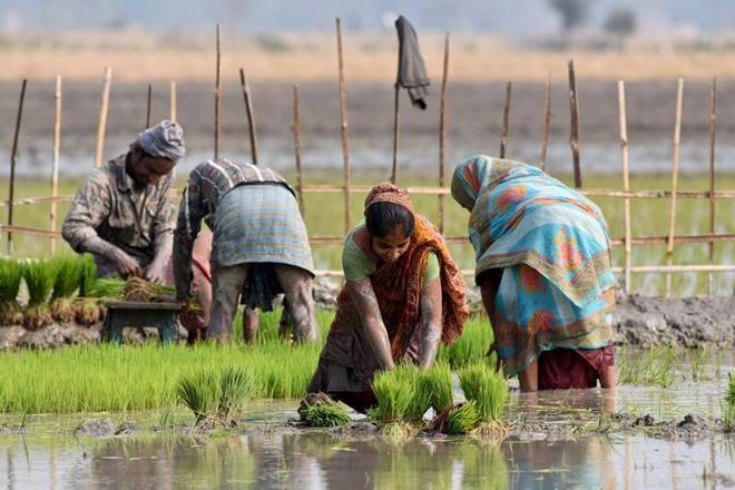 farmers, uttar pradesh