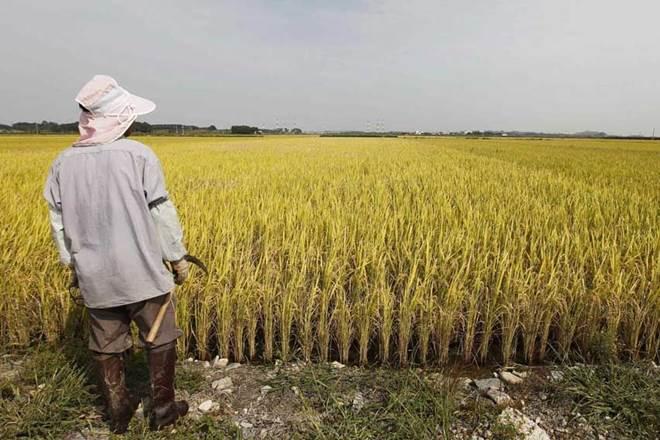 farm income,NABARD,farmer income, economy, farming