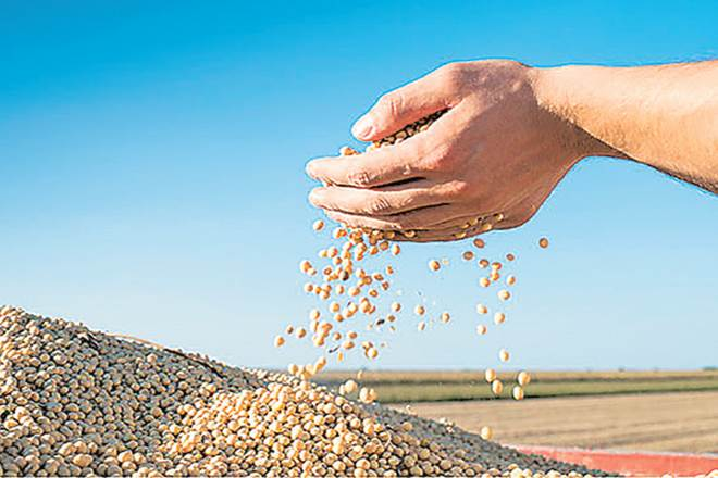 export of oilmeals, SEA,export of rapeseed meal,soybean meal,Vietnam,Thailands
