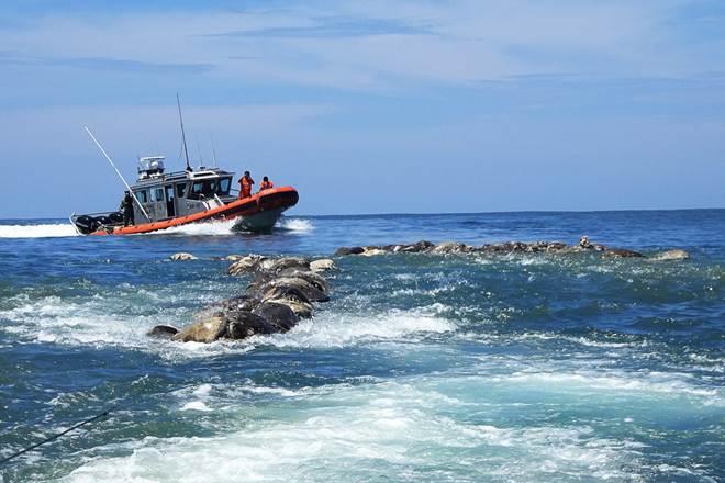 turtles, mexico beach, endangered species, endangered species turtle, Pacific Ridley turtles, Oaxaca, Puerto Escondido, world news