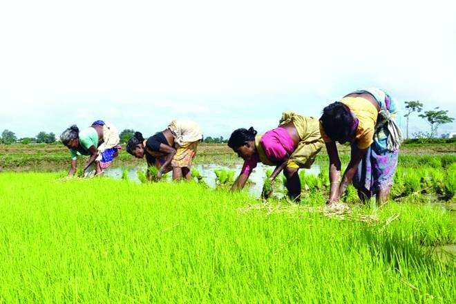 crop, kharif crop, agriculture sector, agricultue industry
