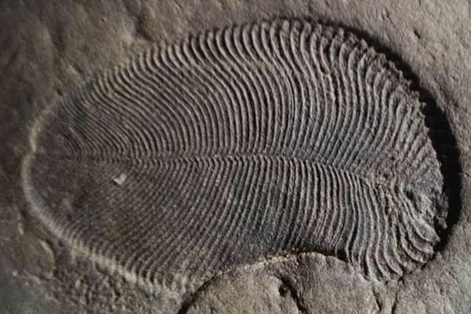 earliest known animal, Dickinsonia, Australian National University, Australian National University scientists, hallmark of animal life, science news