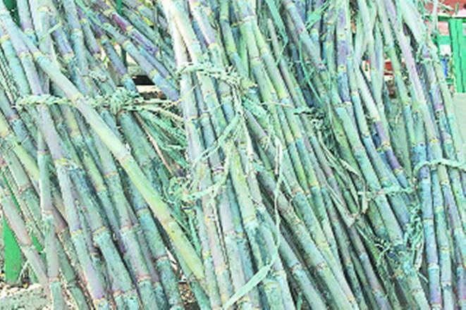 sugar, sugarcane, sugar industry