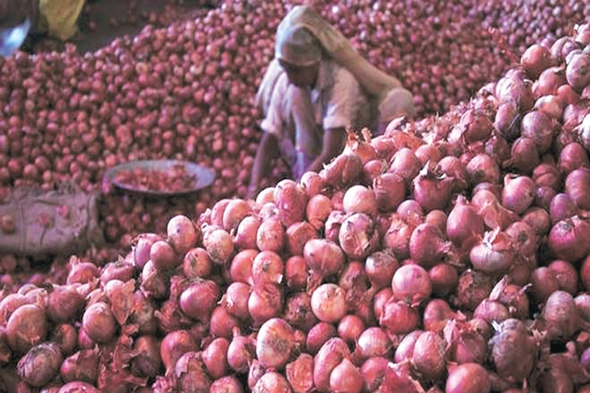 onion price today, onion price in noida, onion price today in up, onion price today in india, onion price today in delhi, onion price in Delhi, onion price in india today, onion price in delhi today, onion price in delhi 2018, onion price in delhi mandi, today's onion market price in india, onion price rise in india today