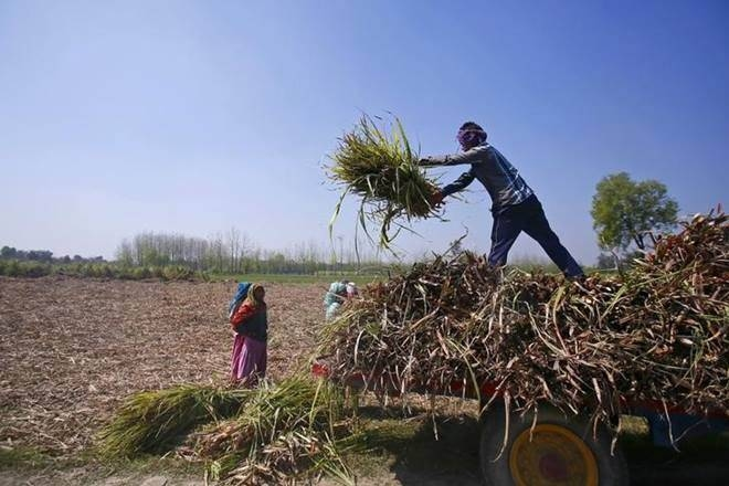agriculture sector, niti aayog